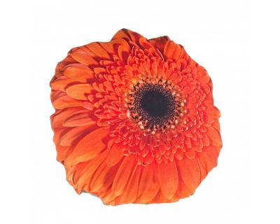 CUSCINO OPTIC GERBERA ARANCIO 60X60