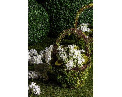 Set2 c.vaso 1m evergreen to