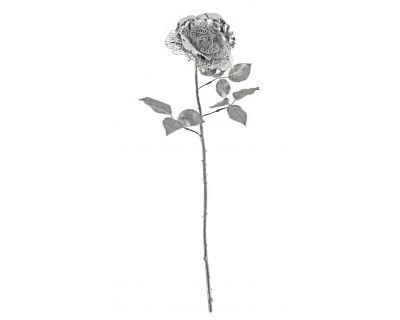 Rosa argento h.67