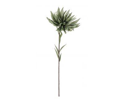 Crisantemo verde h91