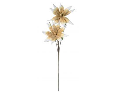 Aloe chinensis x2f giallo h125