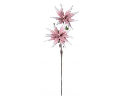 Aloe chinensis x2f rosa h125