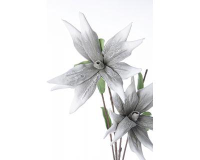 Aloe chinensis x2f grigio h125