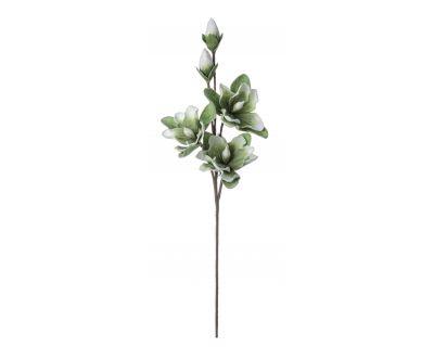 Magnolia bocciolo x3f+2b...